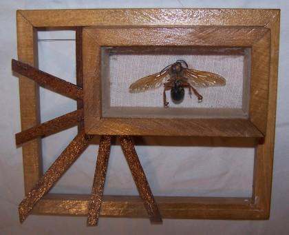 framed hornet