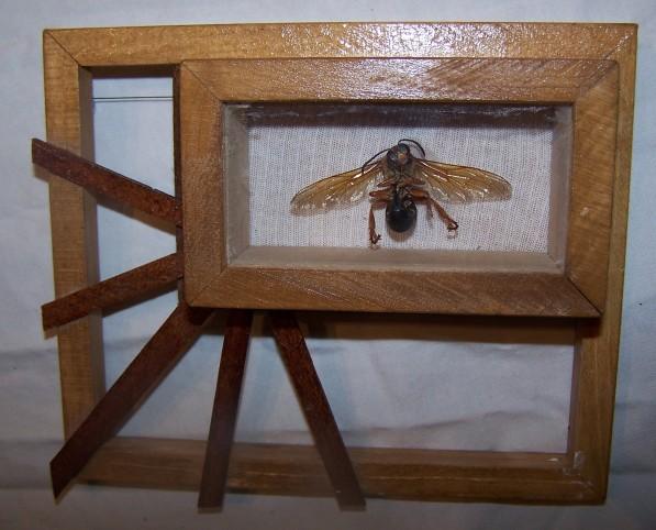 framed hornet (2nd angle)